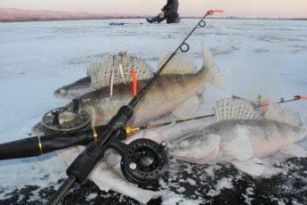 Как ловить судака зимой