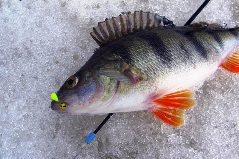 Рыбалка зимой на безмотылку