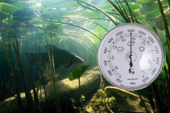 Клев рыбы от погодных условий и атмосферного давления